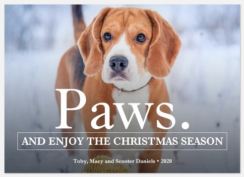 Paws & Enjoy Holiday Photo Cards